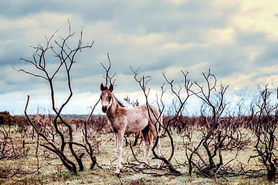 Freedom for Sale: Wild Horses to Be Slaughtered