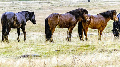 Decomplexicating Equine Nutrition: The High Fat Diet, by Geoff Tucker DVM