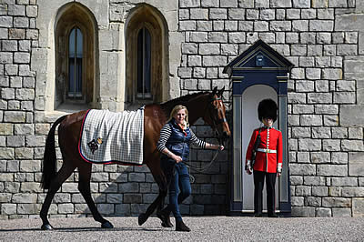 HM The Queen's Champion Horse, Barbers Shop, Arrives at Windsor Castle
