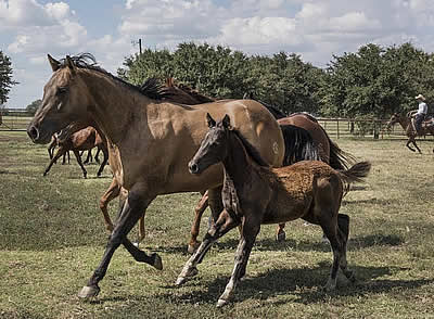 How New Technology Is Making an Impact in the Equine World
