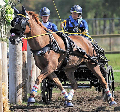 US Para-Driving Team Successful at FEI World Single and Para Driving Championships