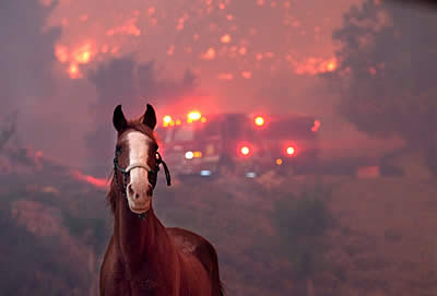 Emergency Funds Needed to Help Equine Victims of California Fires