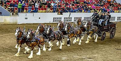Chesapeake International Draft Horse Show to Benefit EQUUS Foundation