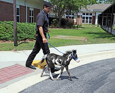 Kentucky Horse park | Horses in the South – A Horse Blog