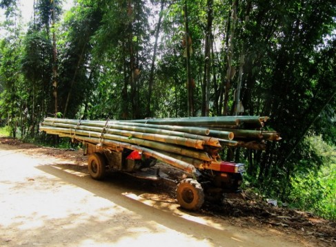 dragon bamboo on horticultural tractor