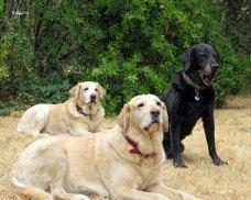 Marlowe, Darla, Truman