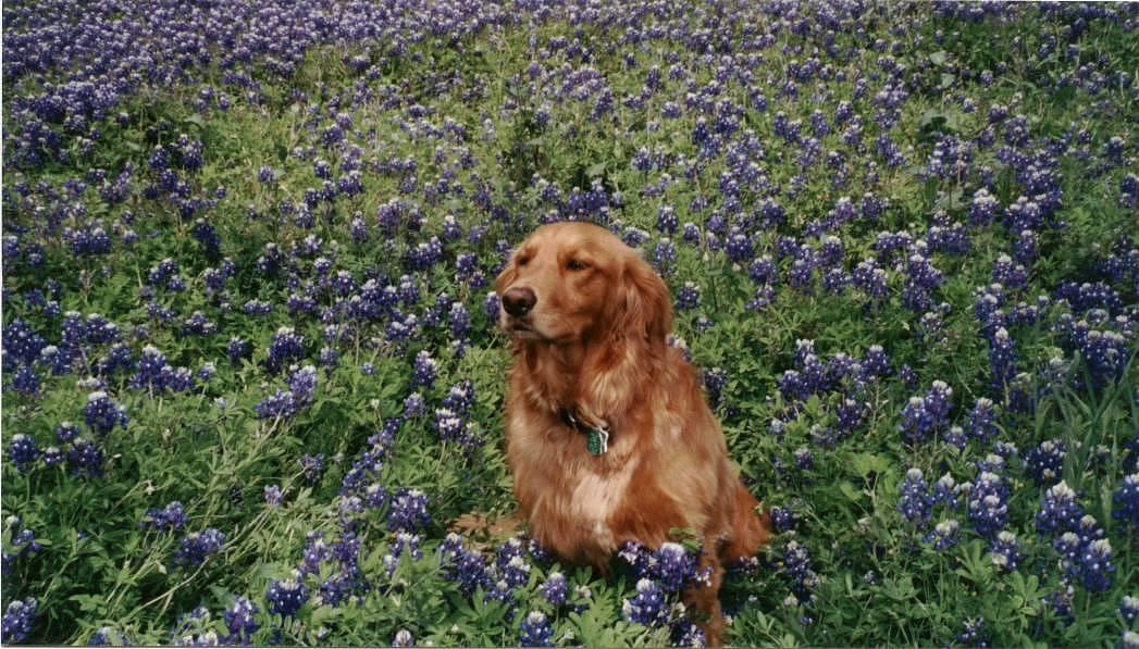 Our dog, Daisy