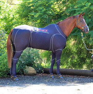 Equine compression suits have been developed to assist horses during travel and help them with recovery from exercise.