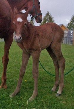 Cute, but ... do you really need to breed a foal?