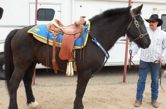 Chief Deputy Leon Wilmot of the Yuma County, Ariz., Sheriff's Office takes Tommy's reins. When Wilmot first tacked up Tommy, he realized how much bigger the horse was than the rest of his office's horses.