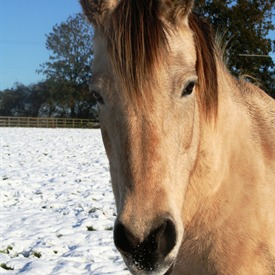 The Horse Trust has said goodbye to Spindles Farm rescue horse Angel.