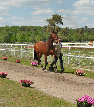 Andrew Nicholson at the trot-up