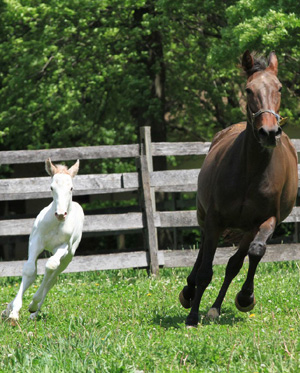 The white colt with his dam, Coochie Mama.