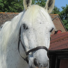 Retired Royal horse Marsa will be part of Jubilee celebrations.