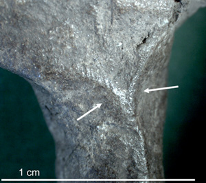 Microscopic photograph of the limb of C1, with pinch marks visible between the arrows.
