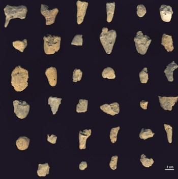 The assemblage of 36 ceramics artifacts from Vela Spila. C1 is at top left.