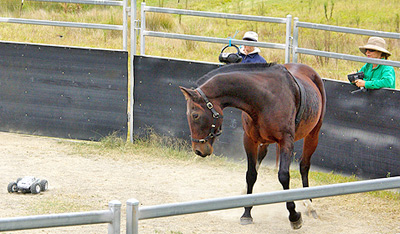 Researchers used a remote control car to mimic the actions of a trainer using the Join-Up method, undermining the idea of a human-horse connection.