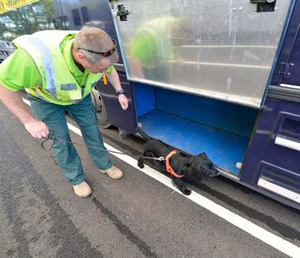 Sniffer dog Bryn checks one of the horse trucks at the Equine Staging Facility.