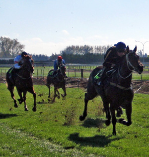 Young thoroughbreds in a race trial.