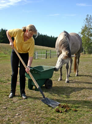 Scooping poop: if harrowing isn't an option, you face the fun job of collecting the dung. The challenge is then to find something useful to do with it.