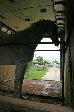 Trailering and barn fires are the two most common emergencies affecting horse owners.