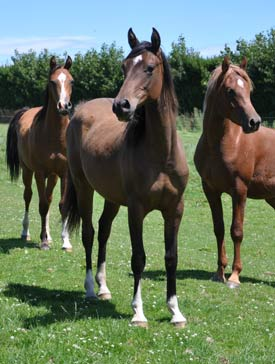 Mammals - including horses - appear to use more genetic material from their fathers than their mothers, US research has indicated.
