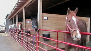 The horses at Seventh Heaven Farm were integral to Jessica Lampe's research project.