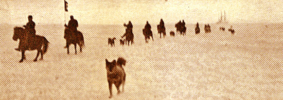 Siberian ponies being exercised in the Arctic Circle by US cavalry veterans.