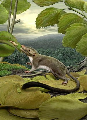 An artist's rendering of the hypothetical placental ancestor, a small insect-eating animal.