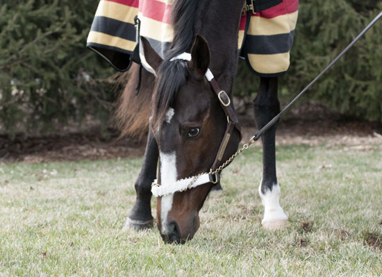 Rachel Alexandra grazes at Rood & Riddle on Friday.