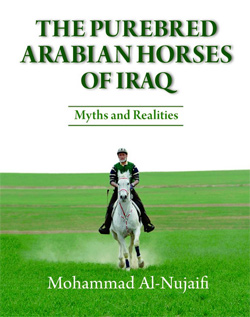 arab-horses-iraq
