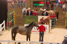 legends-of-ranching-sale-colo