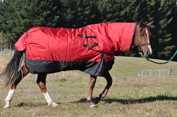 Too hot? Too cold? Researchers devised an experiment to ask horses for their preference over horse rugs.