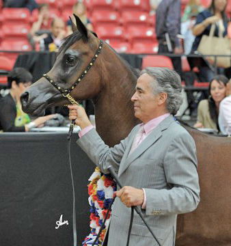 2.Supreme Champion Senior Mare: Najdah Al Zobair for breeder and owner Abdullah Bin Mohammed Al Thani  and shown by Michael Byatt of New Ulm, Texas.