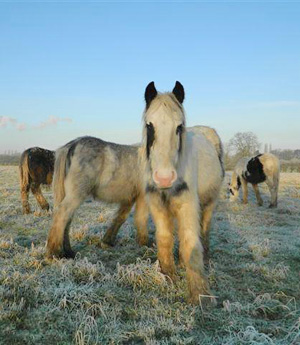 Some of 30 horses left on Vale of Glamorgan Council-owned land near Cardiff Airport, Rhoose, early last year.