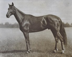Standing proud: Phar Lap strikes a classic racehorse pose in this image from the early 1930s.