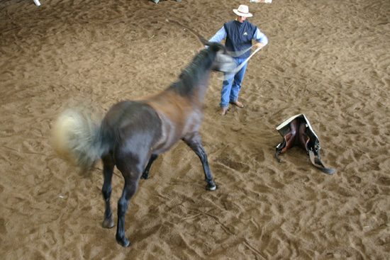 Research has found that horses can indeed buckle under the same kinds of stresses that affect humans.