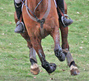 There appears to be little appetite for change in eventing. © Al Crook