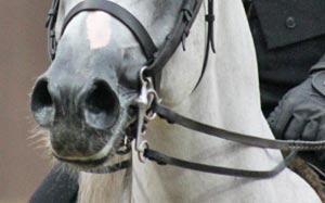 reins-stock