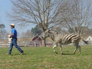 Bobby Lovgren at work on the movie, Stripes.