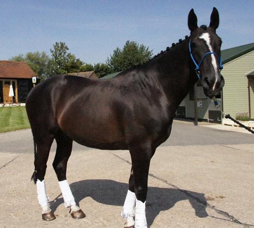 Duke at The Horse Trust.