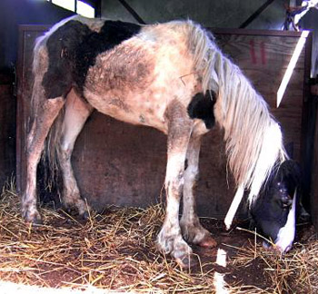 One of the horses taken from Mark Hall's care.