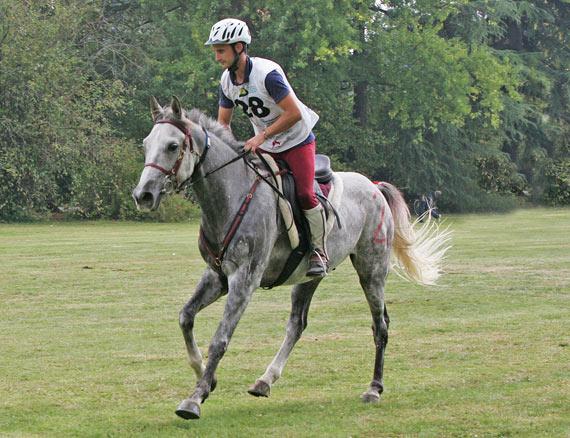 World Young Horse Endurance Champion  Secret de Mon Coeur, ridden by Aurelian Rocchia for France.