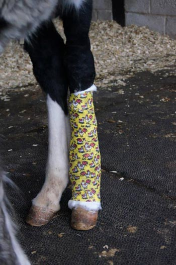 Matty's injured leg is healing well. Photo: Redwings