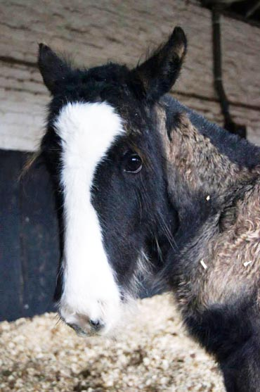 Matty is progressing well under the care of Redwings. Photo: Redwings