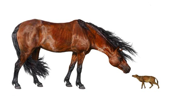 An artist's rendering of the early horse Hyracotherium (right) alongside a modern-day horse. Researchers found that Hyracotherium body size decreased 19 percent during a global warming event about 53 million years ago. Image: Danielle Byerly, University of Florida.