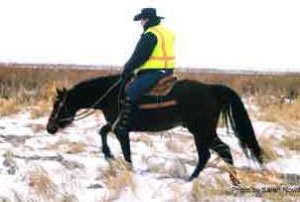 A rider must give their horse its head to allow it the freedom to follow a scent.