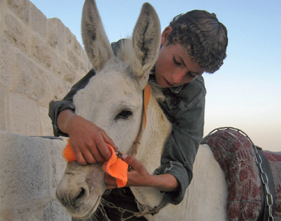 A young boy fits a nose protector made by a WSPA supporter to his family's donkey.