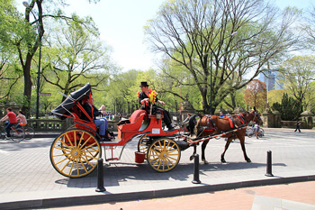 Debate over the future of New York's carriage horse trade is intensifying. Photo: Ingfbruno/Wikipedia