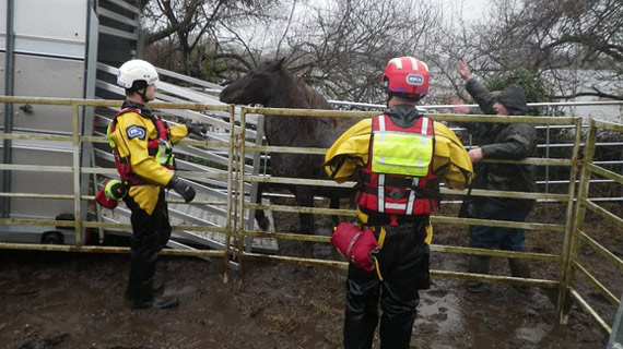 The horses are loaded for removal. Photo: British RSPCA